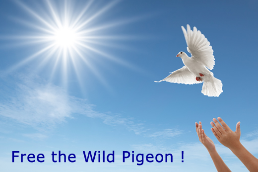 Free the Wild Pigeon